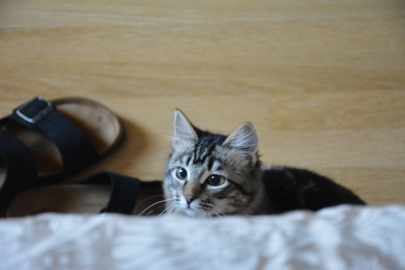 My new kitten, Amy