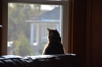 Kitten Around Collection: How much is that kitten in the window?