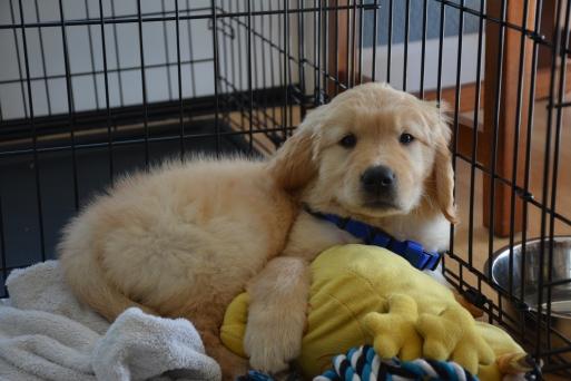 Puppy Love: Meet Archie!