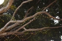 SLOly: Fairy Lights