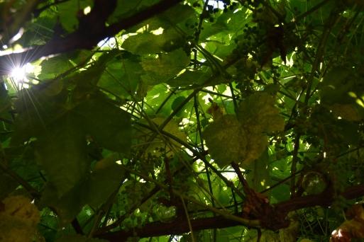 Unbe-leaf-able: Burst