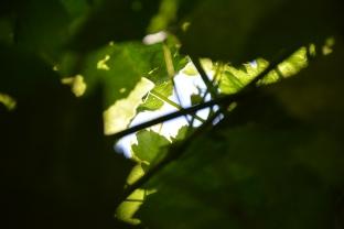 Unbe-leaf-able: Peeking Through