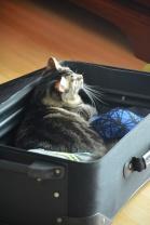 Kitten Around: Please Don't Leave