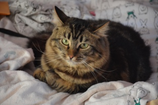 Kitten Around: You have awoken me