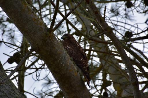 A Tree Friend