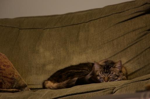 Come Along Pond: Flat Cat