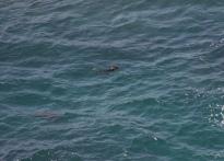 Point Lobos: Otter thoooooose?!
